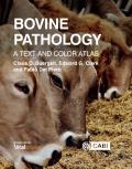 Bovine Pathology