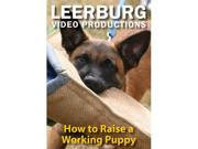 How To Raise A Working Puppy