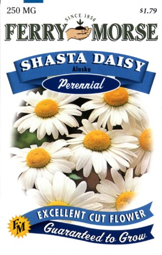 Ferry-Morse 1141 Shasta Daisy Perennial Flower Seeds, Alaska (250 Milligram Packet)