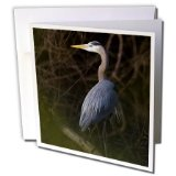 Danita Delimont - Birds - Great Blue Heron roosting, willow trees, Texas, USA - US44 LDI0901 - Larry Ditto - 12 Greeting Cards with envelopes (gc_147006_2)