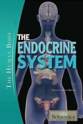 The endocrine system, comprised of a number of hormone-secreting glands, is vital to the functioning of the human body