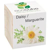 Ecocube Daisy