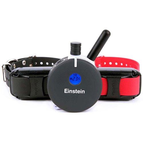 E-Collar Technologies Einstein ET-802A 2 Big Dog Remote Trainer