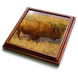 Bison, National Bison Range near Moeise, Montana - US27 CHA1707 - Chuck Haney - 8x8 Trivet With 6x6 Ceramic Tile