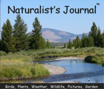 Naturalist's Journal
