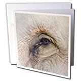 Danita Delimont - Elephants - Sri Lanka, Elephant Orphanage, Asian elephant-AS33 CMI0010 - Cindy Miller Hopkins - 6 Greeting Cards with envelopes (gc_71688_1)