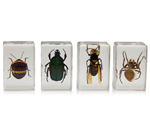 """""""Celestron 44408, The Celestron 44408 is a set of four 3D insect specimens ideal for observing and imaging with any digital microscope"""