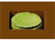 Incense Holder - Lily Pad - Maroma - 1 - Holder