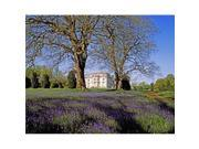 Posterazzi Dpi1798282large Bluebells In The Pleasure Grounds Emo Court Co Laois Ireland Poster Print By The Irish Image Collection, 30 X 24 - Large