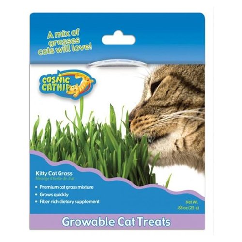 Ourpets Company 090129 Cosmic Kitty Cat Grass
