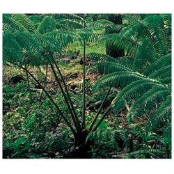 Red Ginger Root, Dendrobium Orchid Starter Plant, Tree Fern Starter Plant, Combo Value Pack # 94024