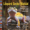 The leopard gecko has fast become the reptilian version of the parakeet or goldfish