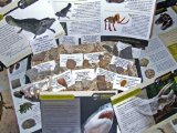 IMPROVED CONTENTS LOWEST EVER PRICE *FREE SHIPPING DIRECT FROM AMAZON US* - Genuine Dinosaur and Fossil Collection - NEW 25 Piece Collectors Gift Set of Fossils - Dinosaur Bone   Shark Teeth and More - Labels, Certificates of Authenticity and Information Sheet - Set 2