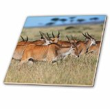 3dRose Kenya, Maasai Mara National Reserve, Giant Elands. - Ceramic Tile, 6-Inch (ct_206188_2)