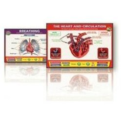 Interactive Whiteboards Heart And Breathing Set