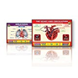 Daydream Education Heart And Breathing interactive Whiteboards Set