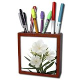 3dRose ph_46838_1 Oleander White White, Flower, Tree, Oleander, Blossom, Tropical Plant, Buds Tile Pen Holder, 5-Inch