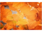Trademark Fine Art Philippe Sainte-Laudy 'Seasonal Leaves' Canvas Art